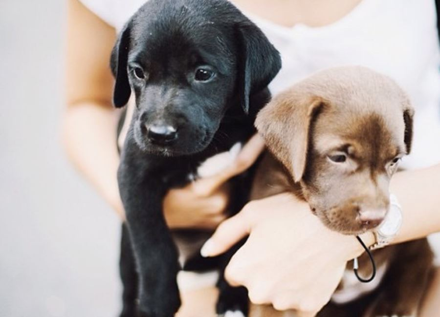 20 Signs You're Completely Obsessed With Dogs