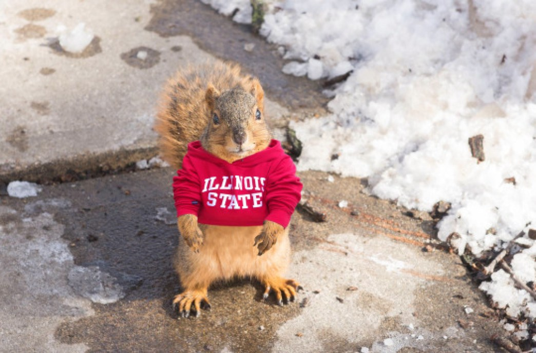 cute Illinois State squirrel in a sweater
