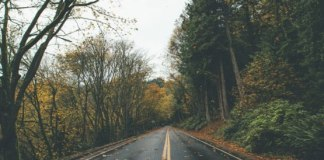 The best places on earth are in western North Carolina. Keep reading for 10 fall road trips in North Carolina that you absolutely have to take!