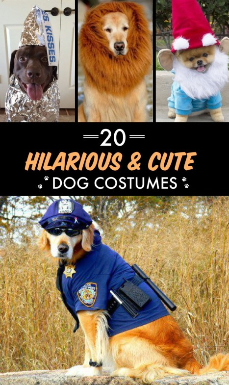 These dog halloween costumes are so cute!