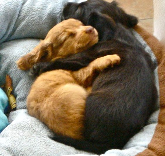 19 Pictures of Cuddling Puppies To Get You Through Finals