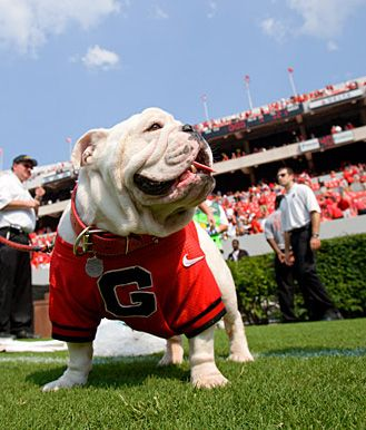 UGA is the home of some proud dawgs!