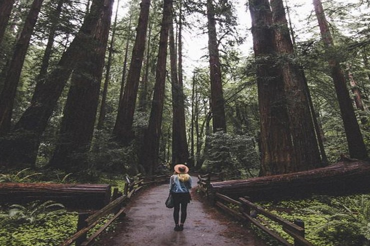 Sometimes you just need an adventure to a new place. These are the top places to go when you need a break from the city life around UC Berkeley!