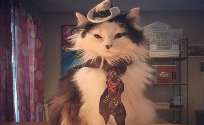 15 Cat Cowboy Hat Pictures That Will Melt Your Heart - Society19 6b56ffc90a69