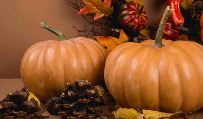 If you want to get your room ready for fall then you need the right essentials! These autumn-themed items will make the atmosphere of your room crisp!