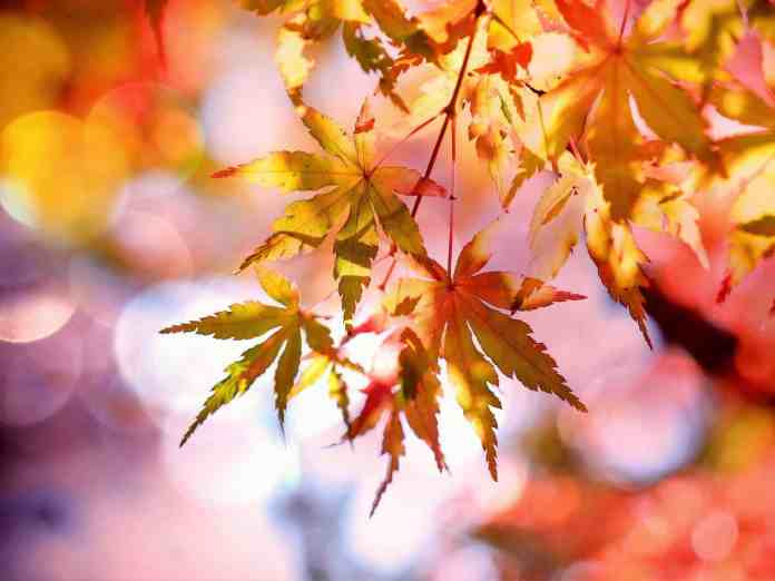 Do you think that you're an autumn person? We've got all the signs that you probably love fall more than any other season!