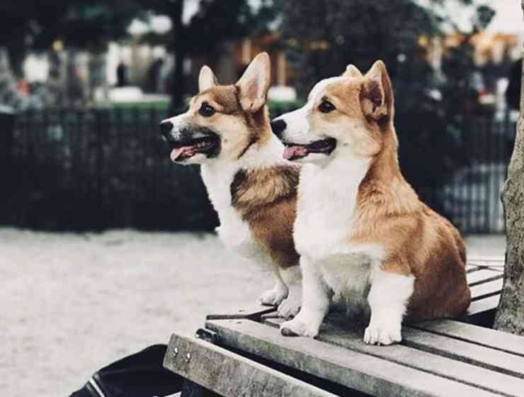 These are some of the animal instagram accounts that people cant get enough of. These friendly animal faces is garenteed to make your day better.