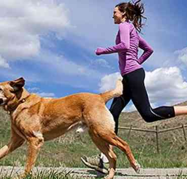 Here are afew reasons why is beneficial to go running with your dog. These tips will open your mind of how healthy this can be for your lifestyle.