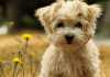 10 Dog Breeds That Are Perfect For Apartments