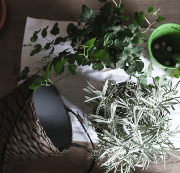 8 Dorm Room Plants That Even You Won't Kill