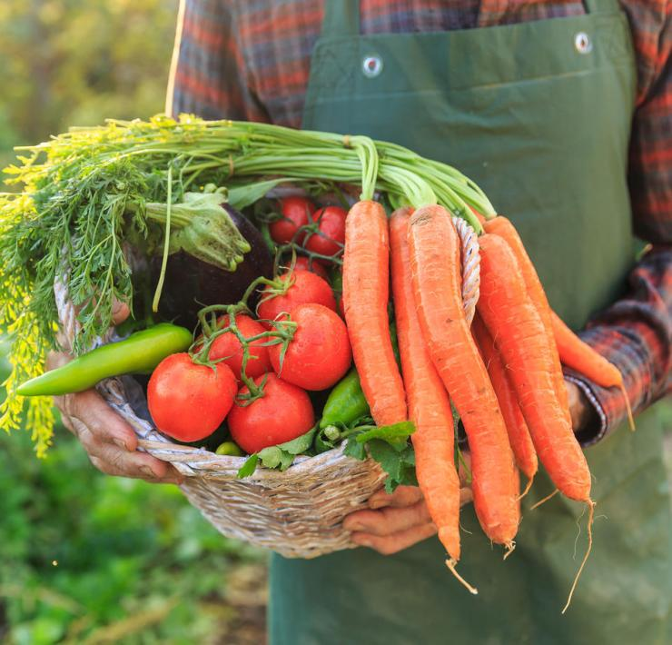 Easy Ways To Transition To A Plant-Based Diet
