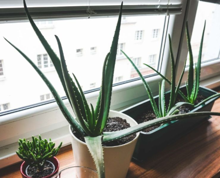10 Of The Best Uses For Aloe Vera That Will Change Your Life