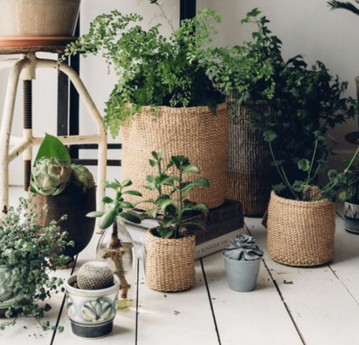 Top 8 Plants to Grow This Summer - With No Risk Of Them Dying