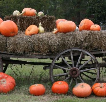 Hayrides, Why You Should Have Hayrides On Your Fall Bucket List