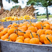 Why You Need To Visit Pumpkin Patches This Fall