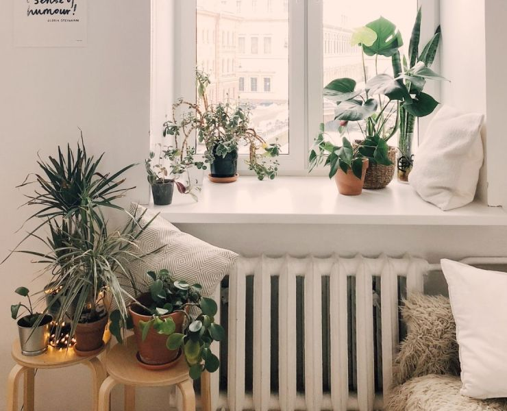10 Best Indoor Plants That Will Liven Up Your Space