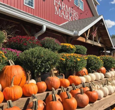 5 Fun Things To Do Around Your Town If You're Bored This Fall
