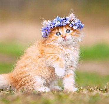 8 Cat Breeds You Can Totally Hide In Your Rental
