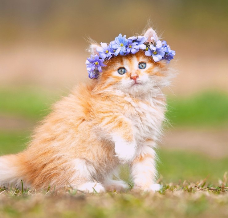 Cat Breeds, 8 Cat Breeds You Can Totally Hide In Your Rental