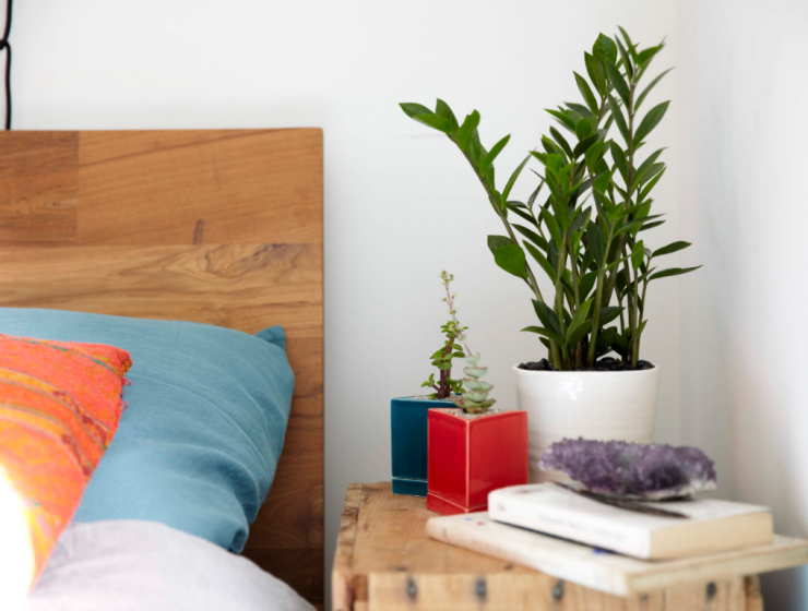 6 Household Plants To Get For Your Room