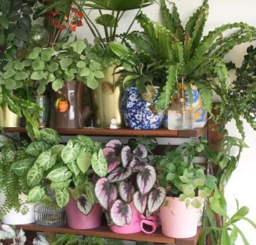 The Ultimate Guide To Buying Plants For Your Room