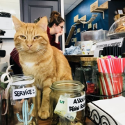 Are 'Kitty Cafes' Really A Good Business Idea And Should You Visit Them