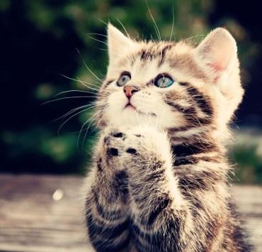 The Feline Code: A Guide To Understanding Your Cat's Secret Language