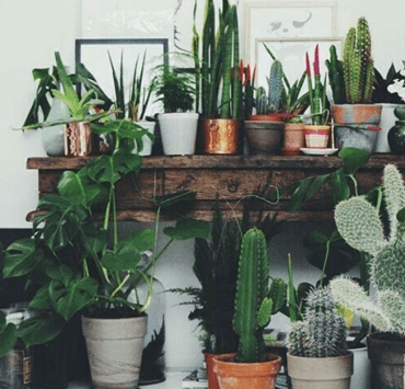 Plants, 10 Pretty Plants To Spruce Up Your Apartment That Are Easy To Take Care Of