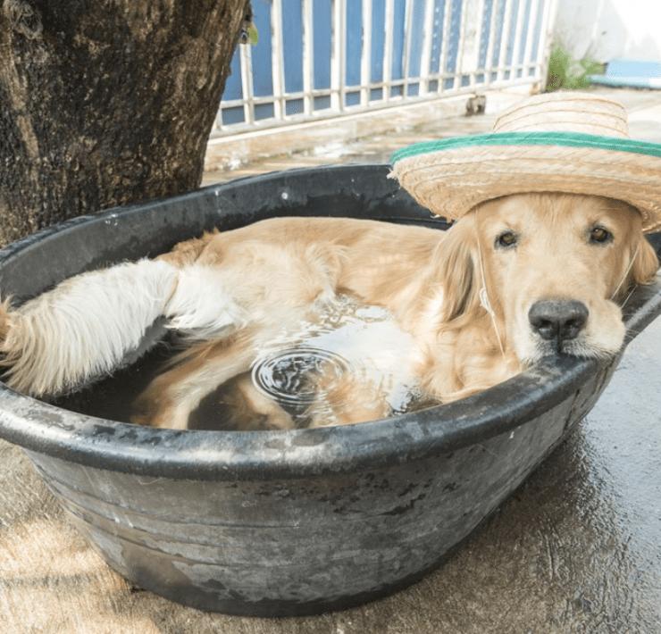 10 Ways To Beat The Heat In Summer 2020