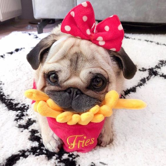 Best Places to Shop for Your Fur Babies