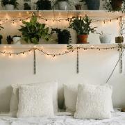 Indoor Plants, 10 Indoor Plants That Thrive In Dorm Rooms