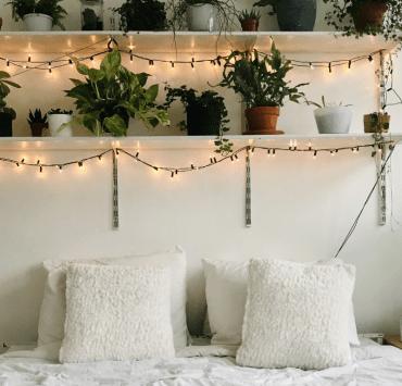 10 Indoor Plants That Thrive In Dorm Rooms