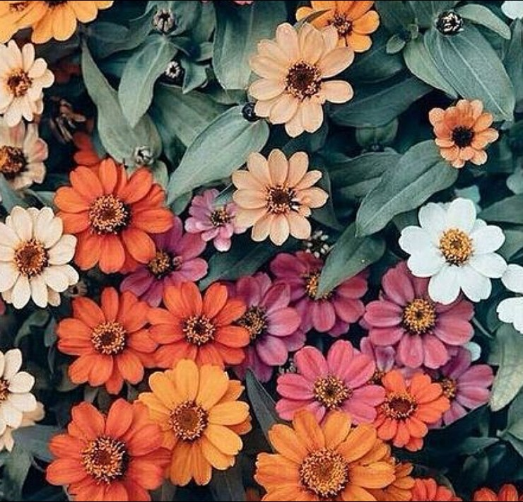 Flowers And Plants, Benefits To Having Flowers And Plants In Your Home