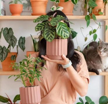 10 Planters That Your Houseplants Need To Call Home