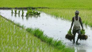agriculture in india information and Importance