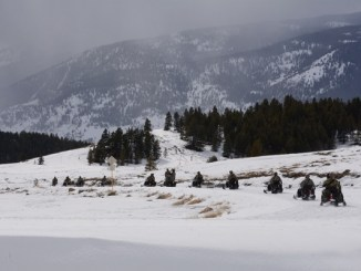 10th SFGA Soldiers drive snowmobiles to an objective during winter warfare training in Colorado. Photo by SGT Timothy Clegg, March 7, 2016.