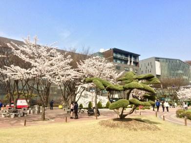 Der zentrale Platz auf dem Campus // The central quad on campus