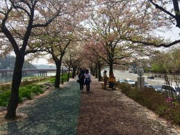 Uferpromenade in Namwon // Riverwalk in Namwon