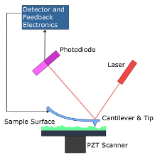 The Schreiber Group - Atomic Force Microscopy (AFM)