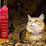 [早安! 地球] 全球10大貓奴聖地
