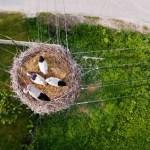 Dronestagram 網站精選2015年最佳空拍照