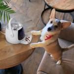 宏碁子公司打造三款寵物用品 包含穿戴裝置、自動餵食器