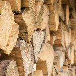Toyota 研發木漿取代鋼材 強度比鋼材高5倍