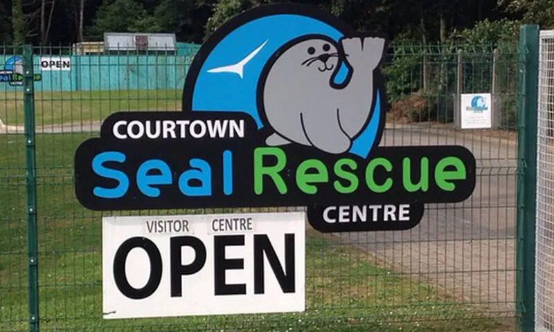 seal-rescue-ireland-courtown