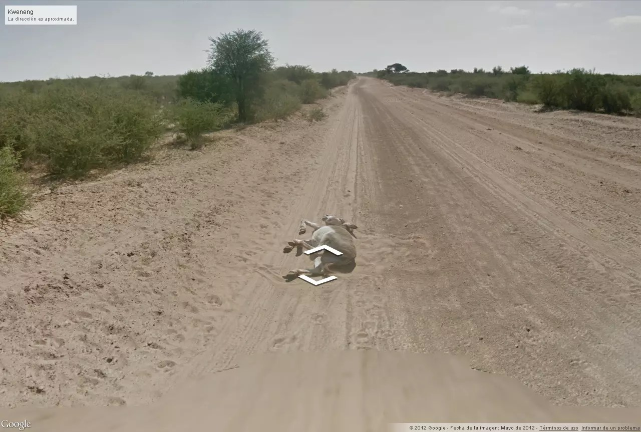 burro atropellado google street view 1