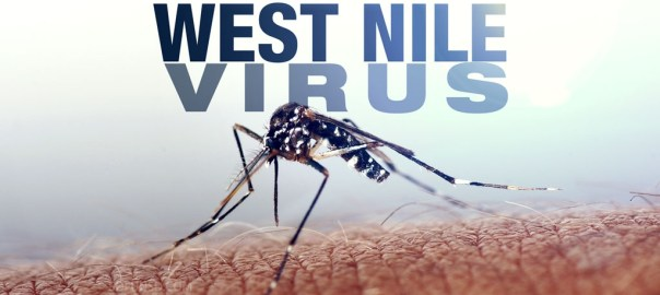 west-nile-virus-mosquito-generic-file-mgfx