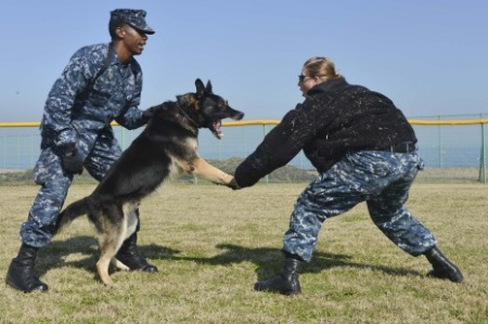 Why the dogs of the Navy SEALs are a force to be reckoned with | Business Insider India