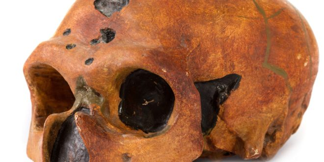 Mary Rose shipwreck skulls go online in 3D | BBC News