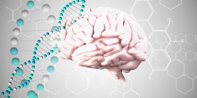 Gene that helps form trauma-related memories may also help prevent PTSD   ScienceDaily