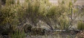 Canadian elite special forces sniper makes record-breaking kill shot in Iraq | The Globe and Mail